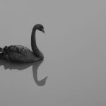Black Swan Trading